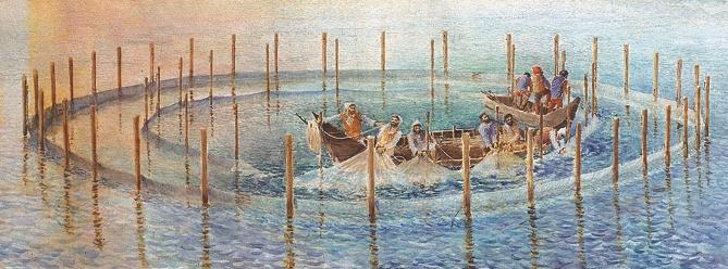 - Figura 9. Pesca dei tori. Con il sollevamento del lembo sommerso della rete, si forma una borsa circolare con tutto il pesce contenuto all'interno. Ricostruzione in un acquerello di E. Pasquali (da Gambini, Pasquali 1996).